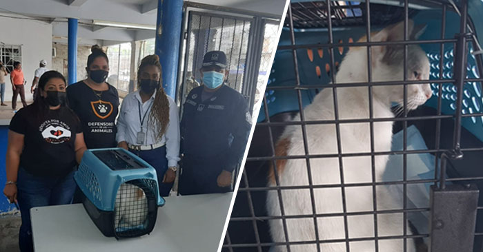 """""""Cat smuggler"""" caught with drugs in a Panama prison"""