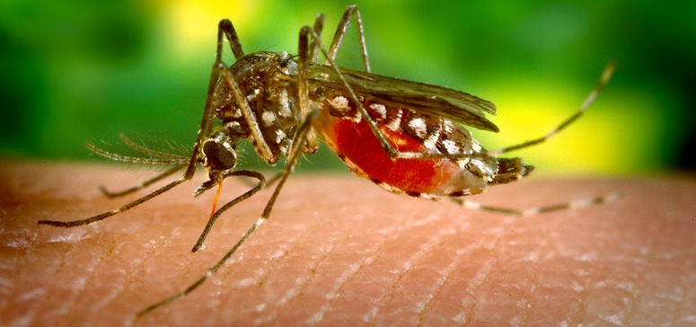 First-ever Zika Virus case reported in Maharashtra's Pune District | Don't Panic